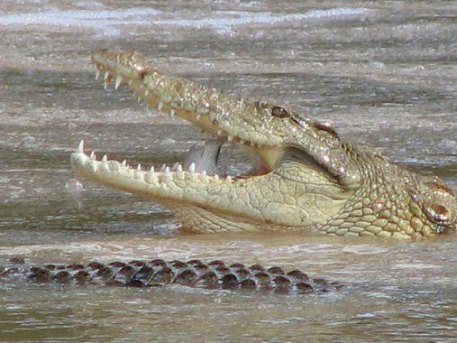 Mơ thấy cá sấu có ý nghĩa gì? Con số nào liên quan đến giấc mơ thấy cá sấu