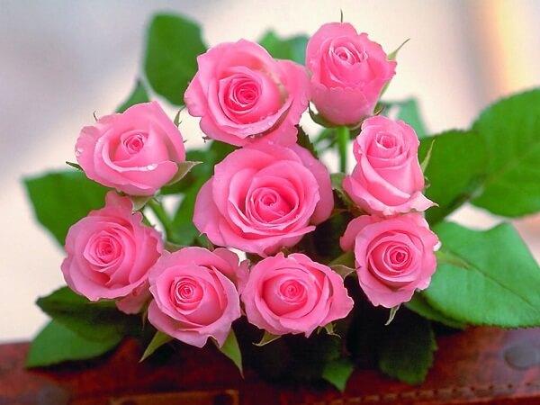 Ý nghĩa và điềm báo của giấc mơ thấy hoa hồng