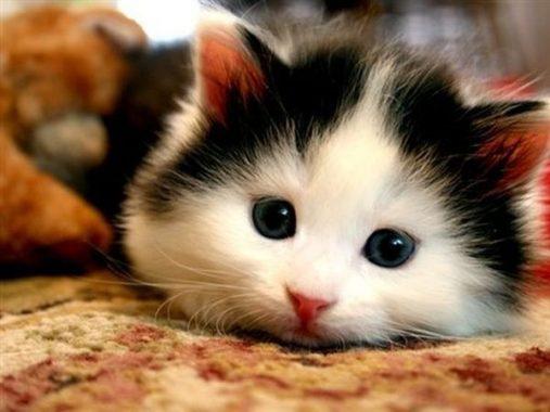 Ý nghĩa của giấc mơ thấy mèo