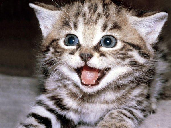Mơ thấy mèo đánh xổ số con gì