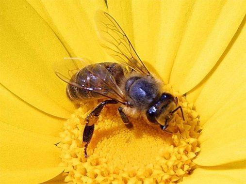 Giải mã con số lô đề của giấc mơ thấy ong