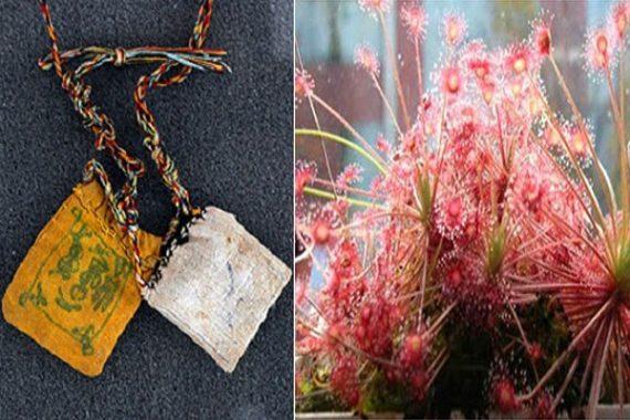 Bùa ngải chính là các loại bùa chú được làm từ các loại ngải.