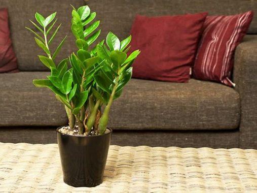 Những loại cây phong thủy theo tuổi rước lộc may mắn vào nhà