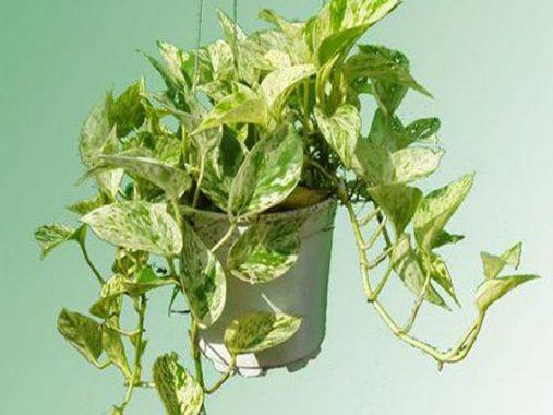 Những loại cây phong thủy mang đến tài lộc cho gia đình bạn