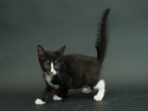 Mèo vào nhà là điềm báo gì, có ý nghĩa gì trong cuộc sống?