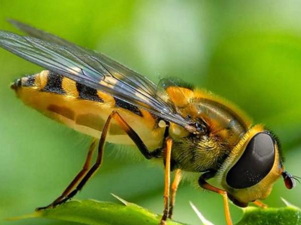 Nằm mơ thấy côn trùng có ý nghĩa gì chơi xổ số con gì may mắn