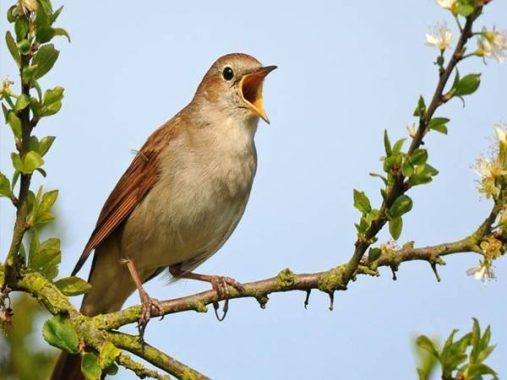 Nằm mơ thấy chim đánh con gì? Ý nghĩa giấc mơ thấy chim