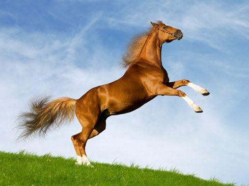 Nằm mơ thấy con ngựa đánh đề con gì chắc trúng?