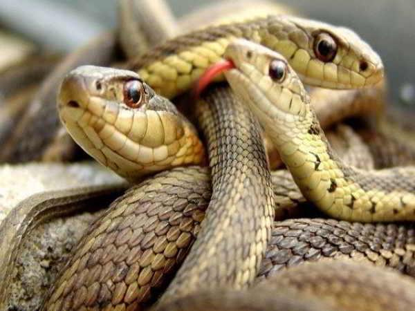 Mơ thấy nhiều rắn đánh con gì đổi đời, có phải điềm dữ?