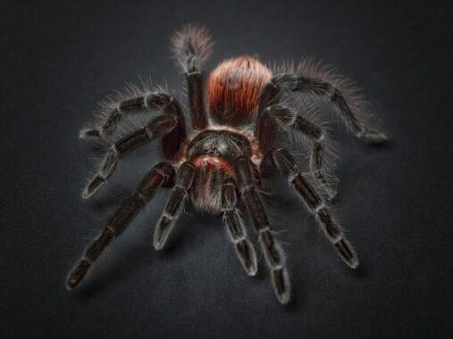 Mơ thấy nhện đánh con gì, điềm báo hên hay xui?