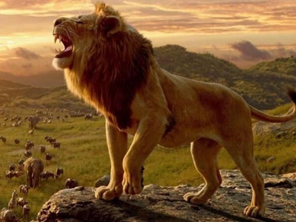Mơ thấy sư tử đừng bỏ qua cặp số may mắn nào? Là điềm gì?